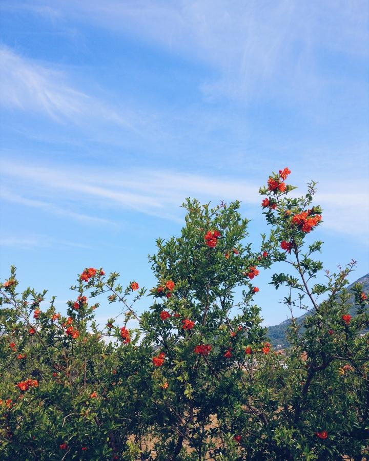 Blumen Montenegro