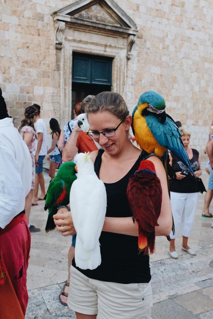 Papagei Dubrovnik